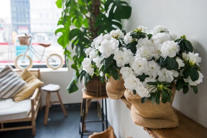 Witte azalea jute zak interieur salon 2